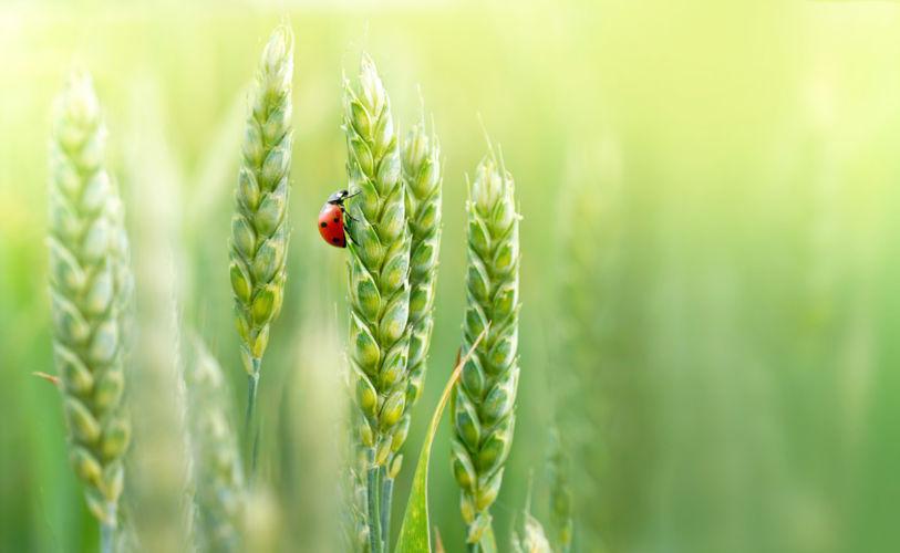 Agriculture régénérative